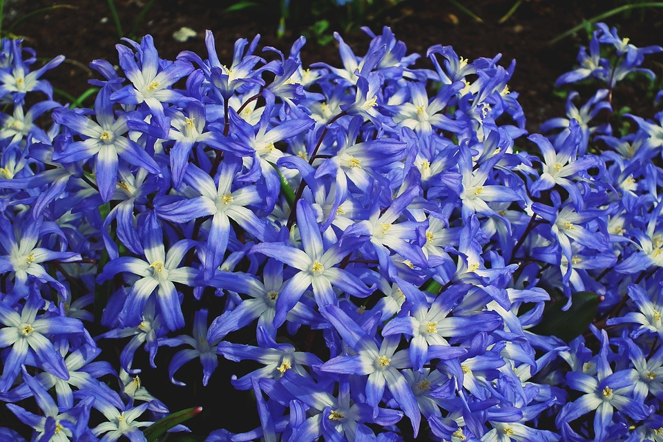 Flowers blue spring free photo on pixabay flowers blue spring garden the petals beauty mightylinksfo