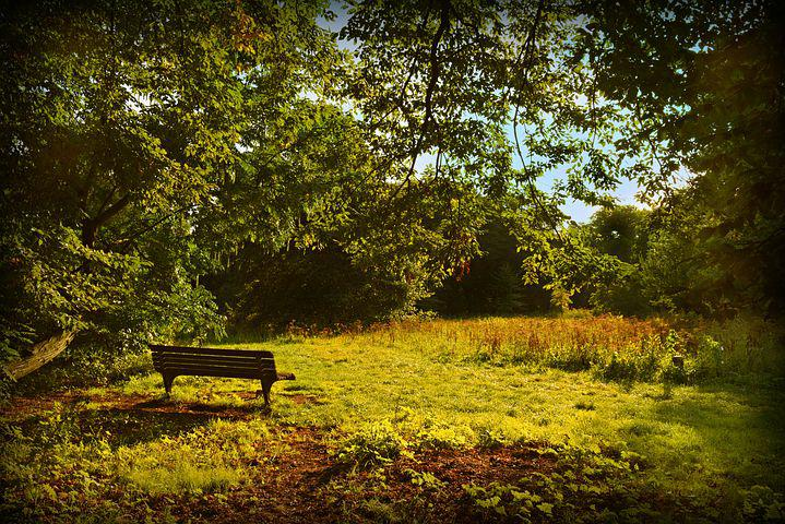 Bench, Sitting, Resting Place, Park