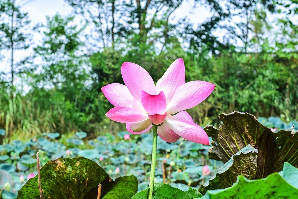 亚洲图片偷窥自拍另类wwwhhhh15com