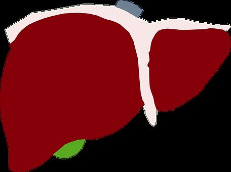 Human Liver, Liver, Red Liver, Heart