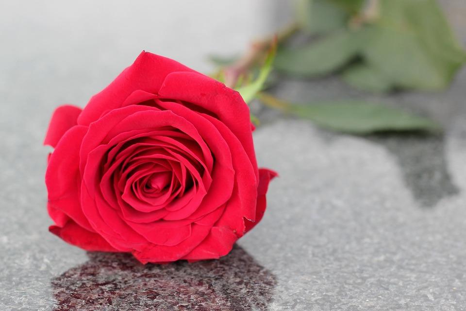 Red Rose Flower Love Symbol Free Photo On Pixabay