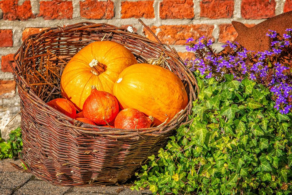 https://cdn.pixabay.com/photo/2018/10/14/17/51/pumpkin-3747003_960_720.jpg