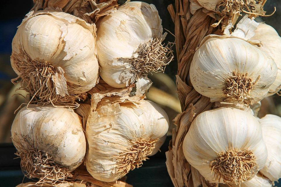 Knoblauch, Lauch, Gewürzpflanze, Heilpflanze, Allium