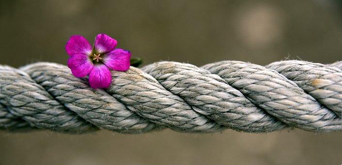 Corda, Flor, Banner, Força, Girado