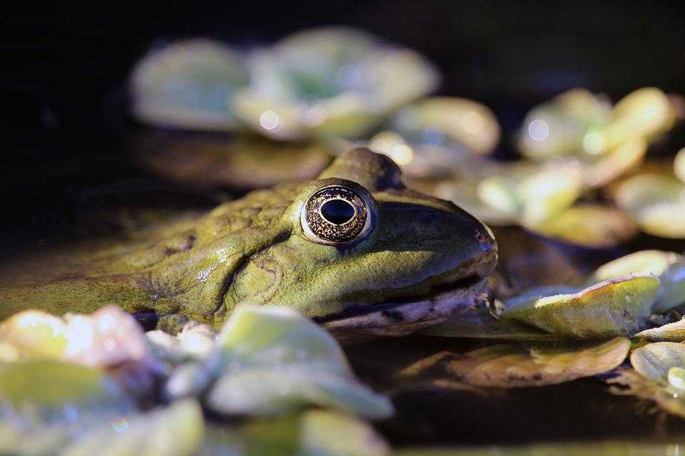 1000+ Gambar Hewan Amfibi Terbaik