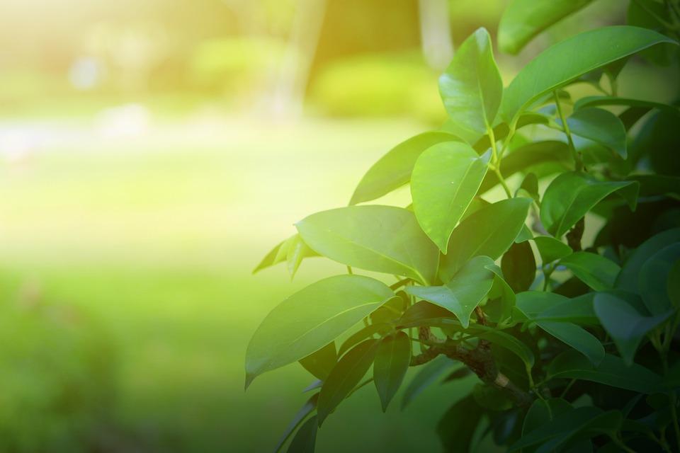 Sfondo Verde Foglie Foto Gratis Su Pixabay