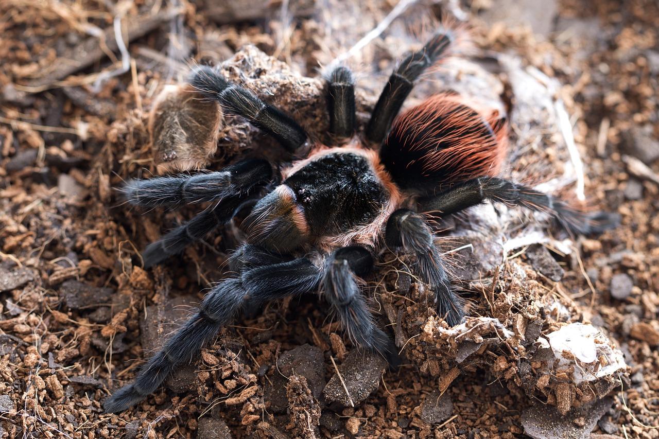 напряжения смотреть фото тарантула красивое освещение бассейна