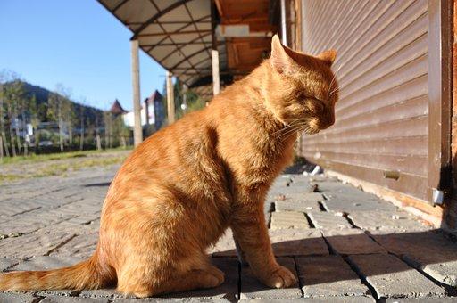 bite noire sur la chatte