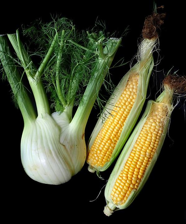 Fennel, Corn, Vegetables, Fresh, Organic, Garden, Food