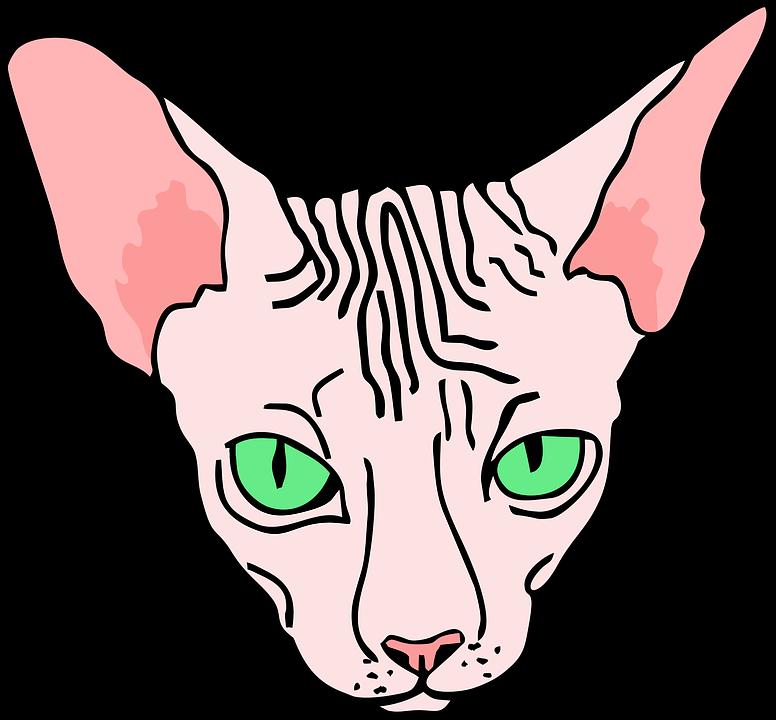 Kizgin Sphynx Sfenks Pixabay Da Ucretsiz Vektor Grafik