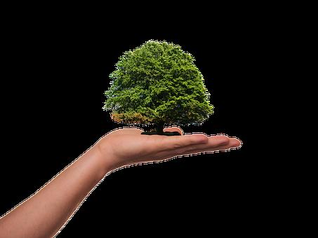Plant, Tree, Green, Ecology, Environment