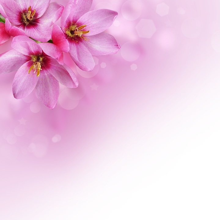 Flowers Background Image Pink Free Image On Pixabay