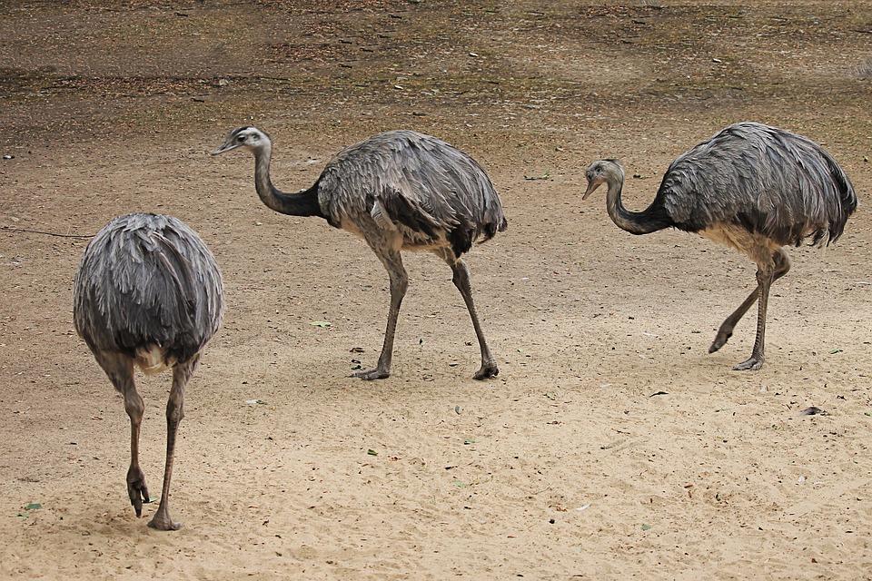φωτογραφία του μεγάλο πουλί μέσα στο πρωκτικό σεξ