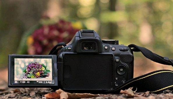 一眼レフ カメラ, 花束, フォレスト, 録画, 表現, カメラ, 写真