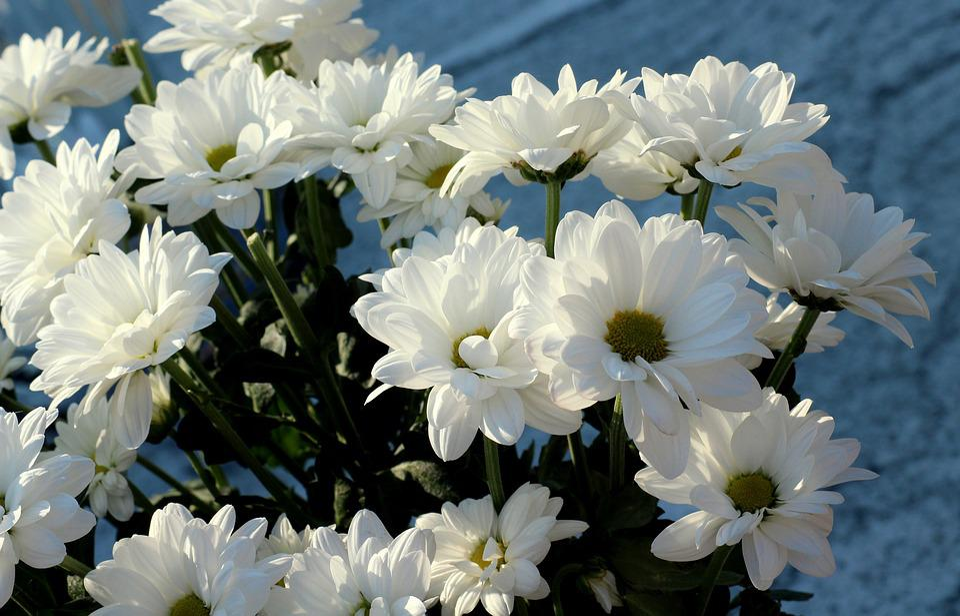 White flowers autumn free photo on pixabay white flowers autumn flowers season figure mightylinksfo