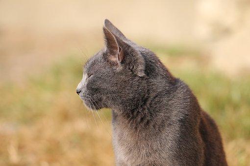 Veľký korisť mačička videá
