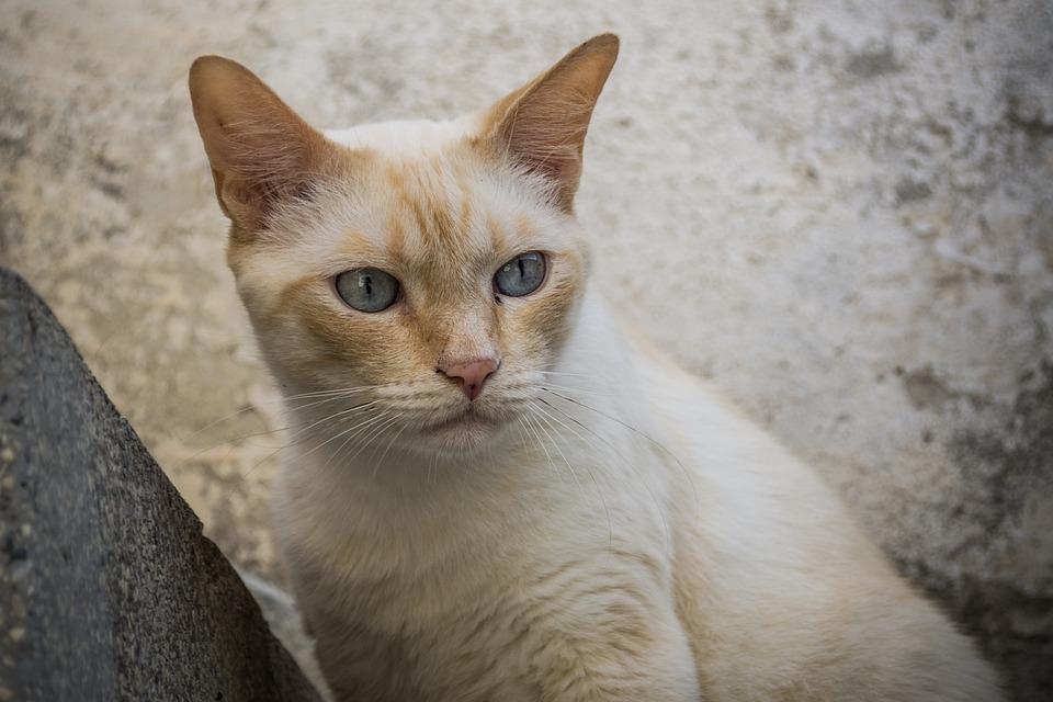 8f885fe3ffac Γάτα Άσπρη Λευκό Κατοικίδιο - Δωρεάν φωτογραφία στο Pixabay