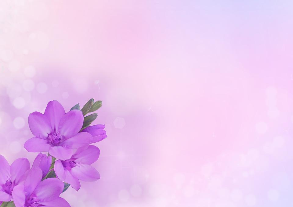 imagem de fundo flor flores roxo rosa
