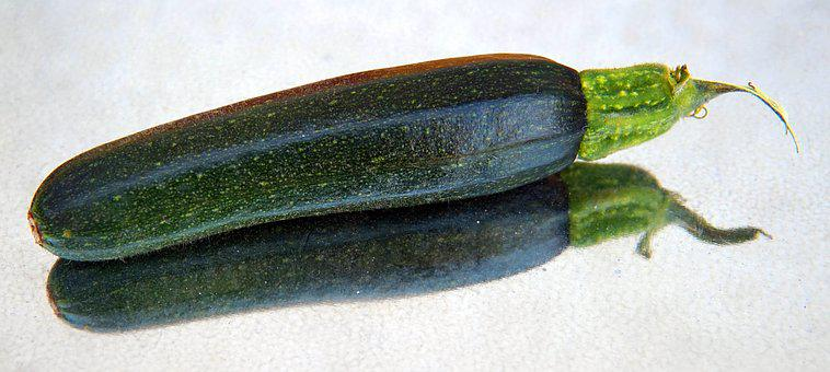 Zucchini, Small, Vegetables, Garden