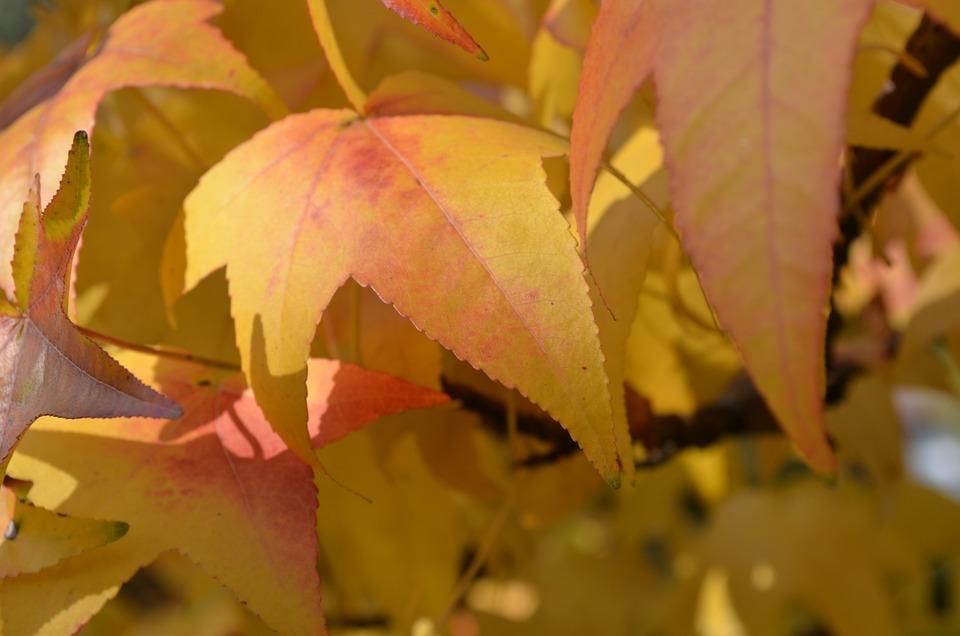 Daun Musim Gugur Mewarnai Foto Gratis Di Pixabay