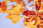 jesienią, spadek liści, liście