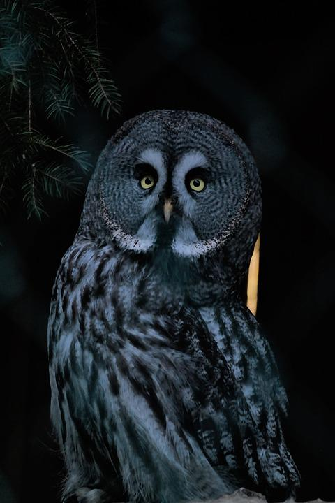 Image of: Tawny Owl Bird Owl Nocturnal Sitting Animal World Plumage Pixabay Bird Owl Nocturnal Free Photo On Pixabay