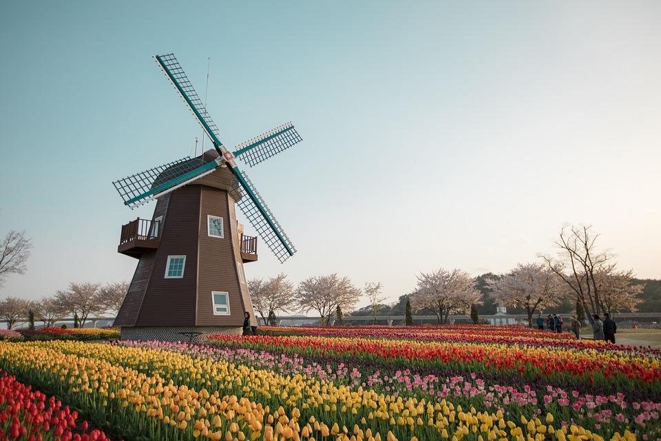 Suncheon湾, オランダの庭園, 風車, チューリップ