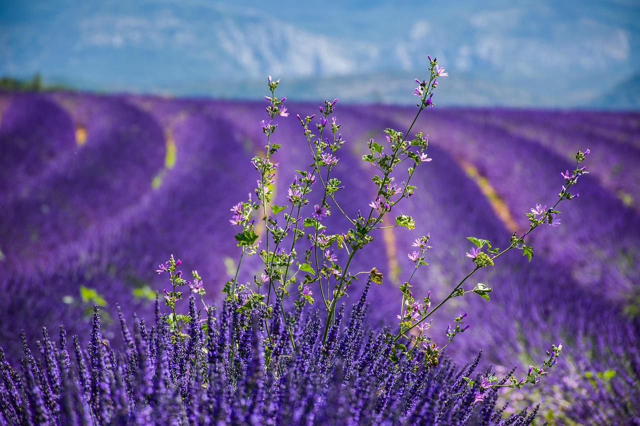 Découverte d'Opio en Provence
