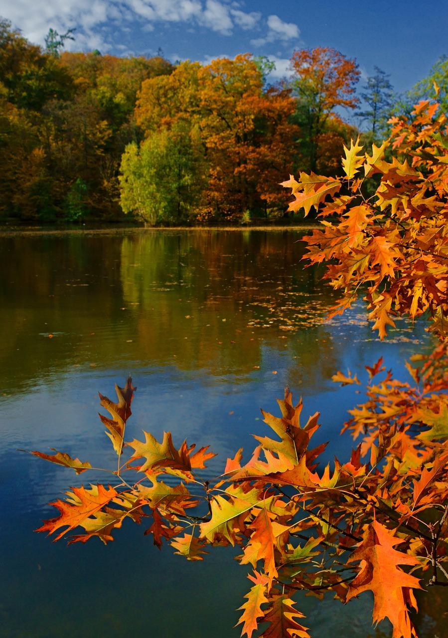 Картинки с природой осени вертикальные