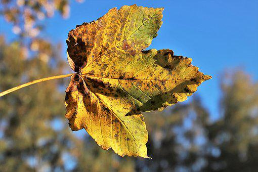Colors Of Autumn, Lived, Leaf, Pattern