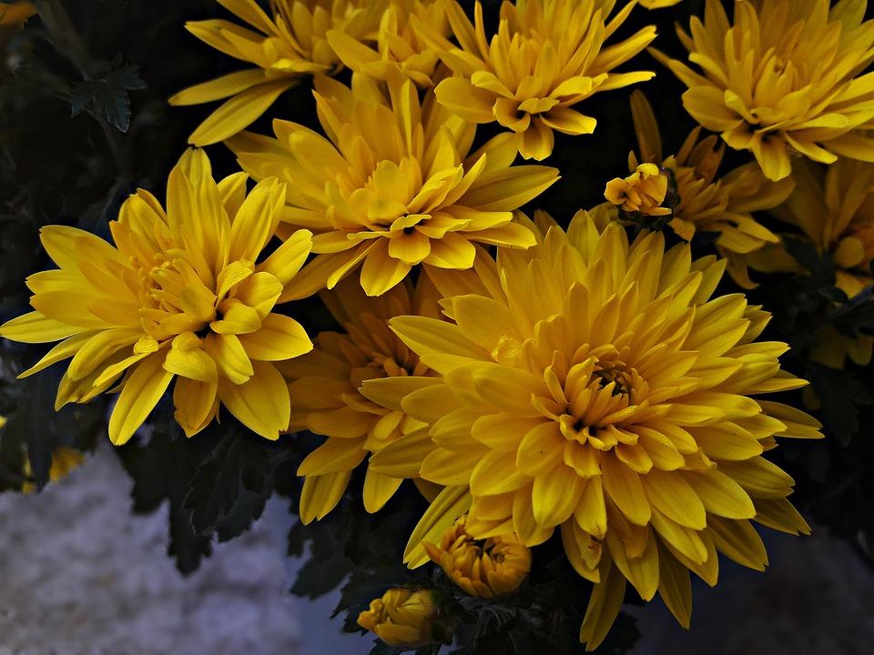 Flowers yellow flower free photo on pixabay flowers yellow flower summer beauty garden nature mightylinksfo