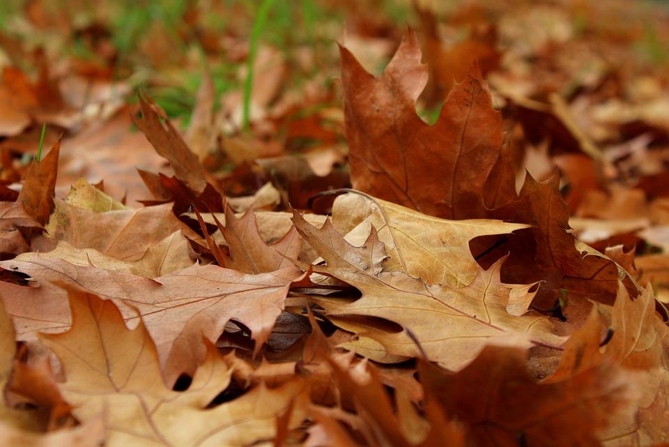 Foliage Autumn October Dry - Free photo on Pixabay