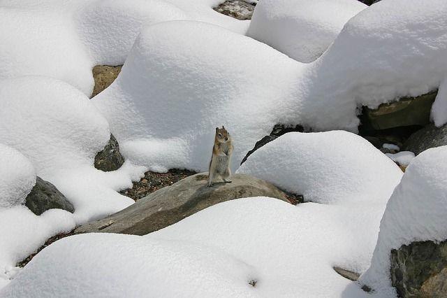 81eb266b9f7 Sne Egern Vinter - Gratis foto på Pixabay