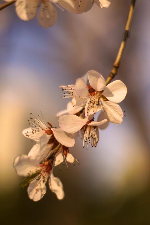 Flower natural spring free photo on pixabay flower natural spring vitality mightylinksfo