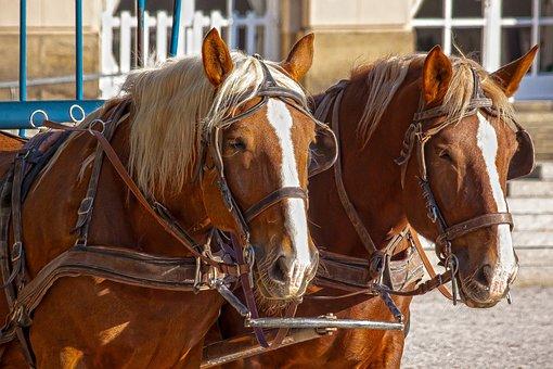 チーム, 馬, Haflinger, 手綱, 交通機関, 交通手段, 馬車 アインの集客マーケティングブログ