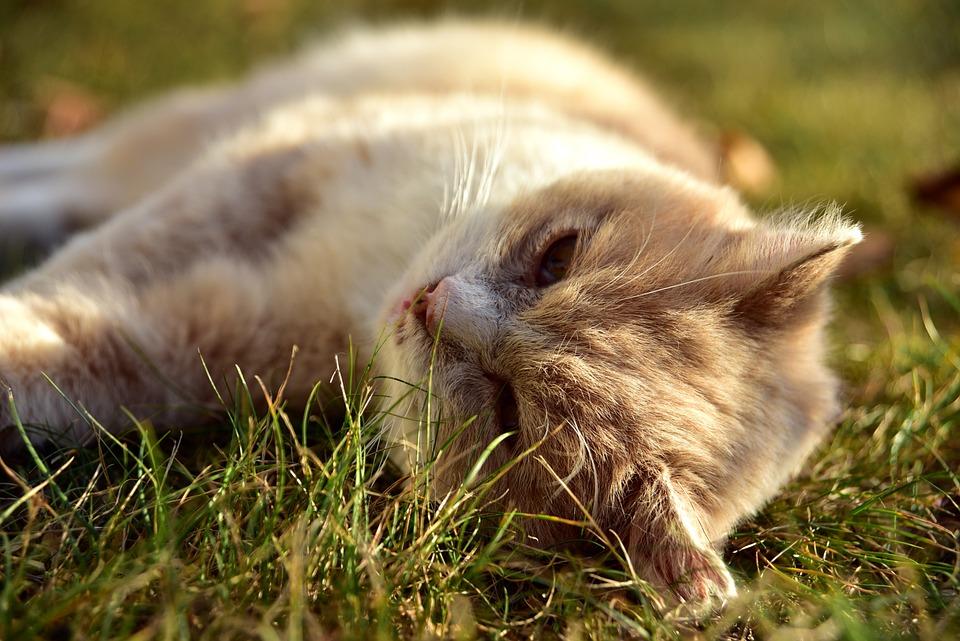 Resaca, Gato, Mascotas, Animales, Prado, Resto, Salto