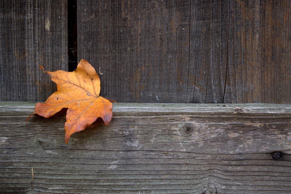 Daun Mewarnai Musim Gugur Foto Gratis Di Pixabay