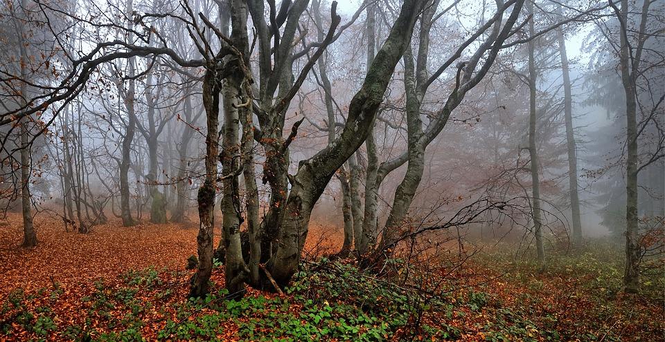 Buchen, Herbst, Blätter, Wald, Baum, Oktober, Branch