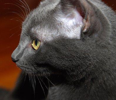 čierna mačička pozeraním