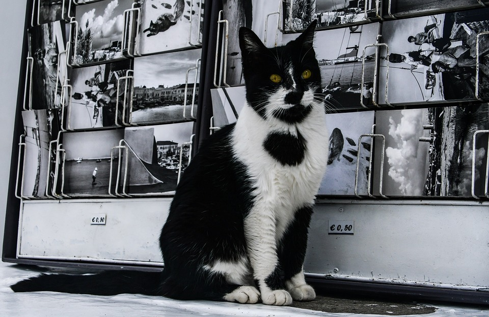 biela mačička pre čierne