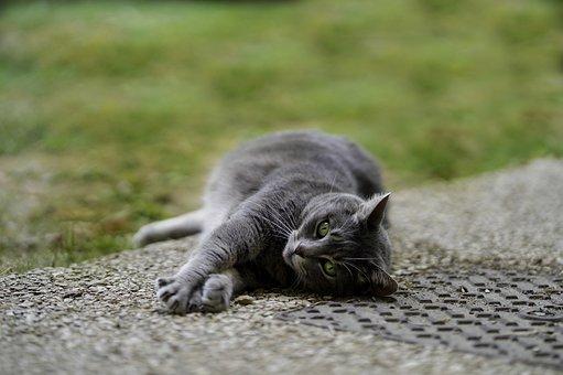 Zrelé čierna mačička obrázok