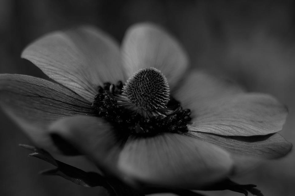 Unduh 53 Gambar Bunga Cantik Hitam Putih Gratis Terbaik