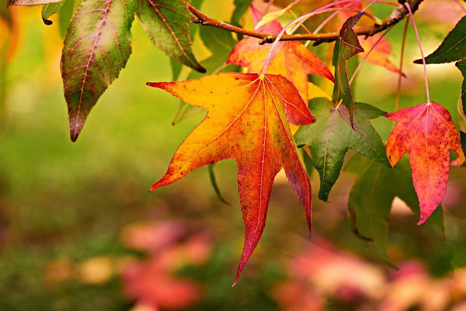 Autumn Leaf, Foliage, Autumn Color, Fall, Tree, Bright