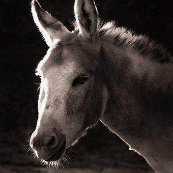 1,000+ Free Donkey & Animal Images - Pixabay