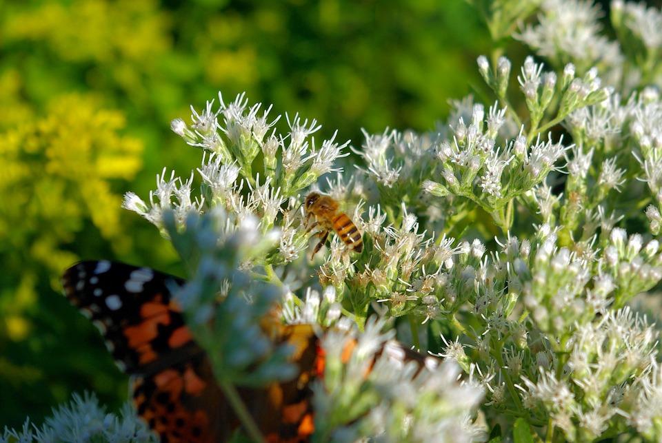 De Albine și Fluturi Pe Flori Fotografie Gratuită Pe Pixabay