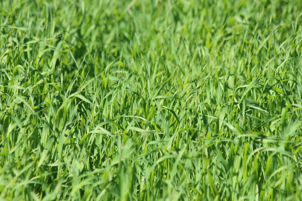 картинки зеленая трава мясная косточка молоко пшено тоже видимо одна