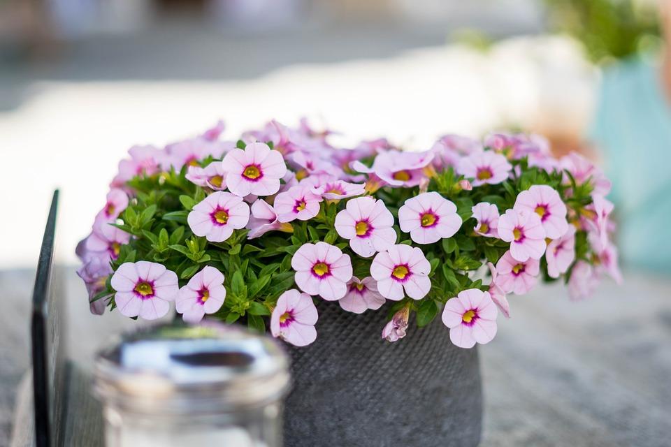 Bloemen decoratie tafel · gratis foto op pixabay