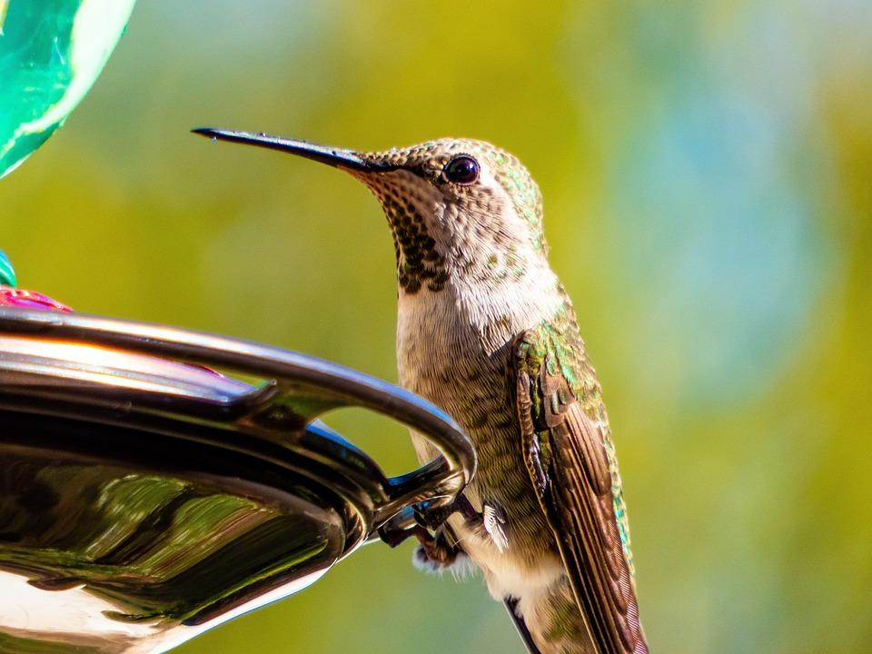 Kolibríky môžu vidieť farby, ktoré si ani nevieš predstaviť