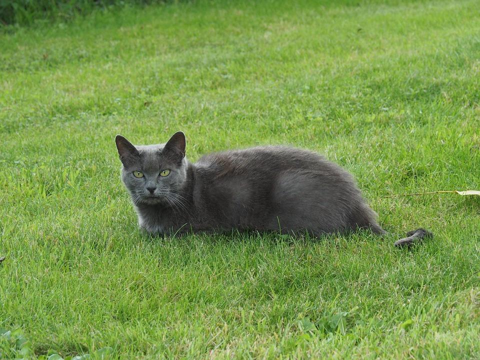 katzengeschirr für katze