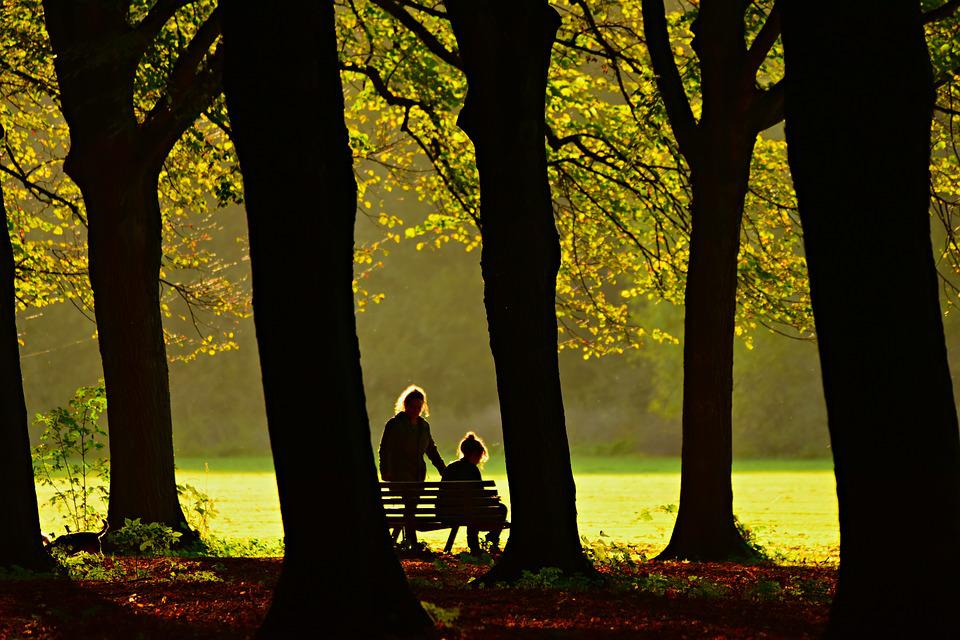 Tree, Silhouette, Forest, Field, People, Bench, Branch